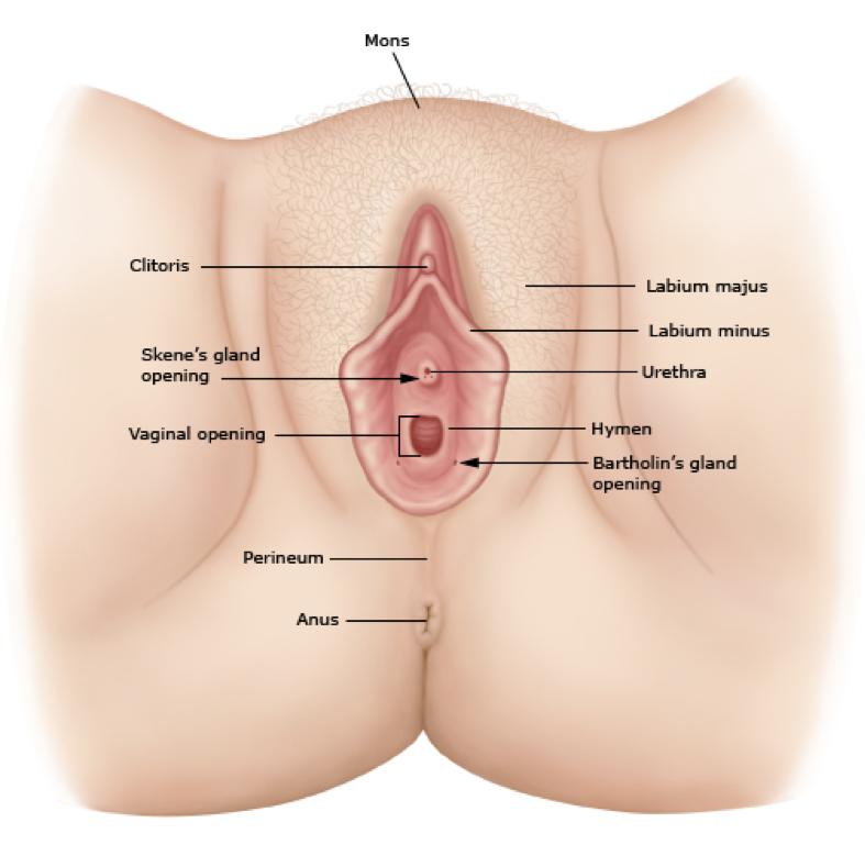split between vagina and anus